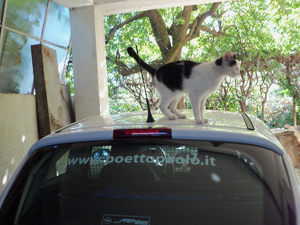 Boetto Paolo Srl - la gatta